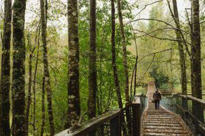 Circuito de trekking e tirolesas na reserva natural do Huilo-Huilo, no Chile.