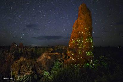 O 'Invasor Noturno', a fotografia desclassificada.
