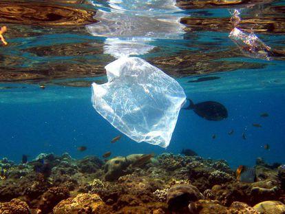 Bolsa de plástico encontrada no Mar Vermelho, no Egito.