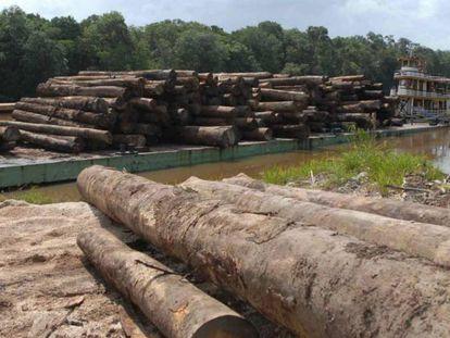 Madeira retirada da Amazônia.
