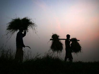 Agricultores em Gauhati (Estado de Assam).