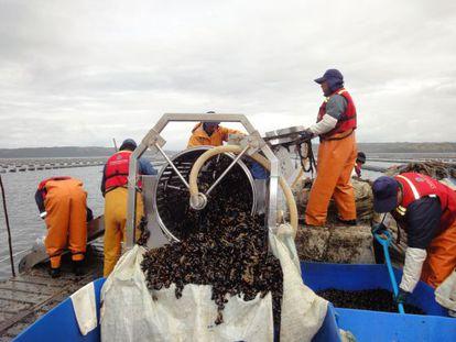 Trabalhadores da Submaris na costa da ilha de Chiloé.