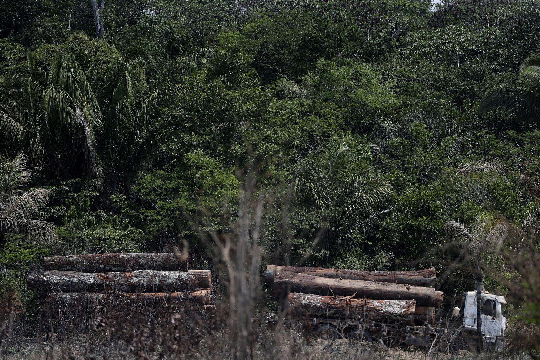 Um caminhão transporta madeira obtida ilegalmente na floresta amazônica, registrado em agosto deste ano.