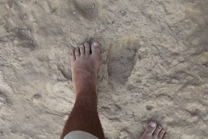 Um pé comparado com uma pegada fóssil de 'Homo erectus'.