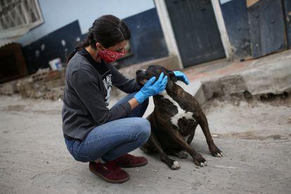 Defensora de animais acaricia cachorro em Bogotá, na Colômbia.
