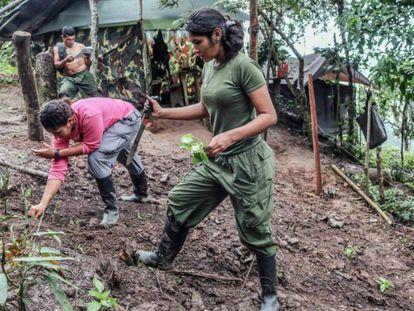 Guerrilheiras das FARC trabalham em horta enquanto aguardam transferência para as zonas de transição