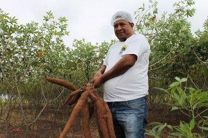 Lourenço de Camilo mostra a colheita de mandioca dos terenas.
