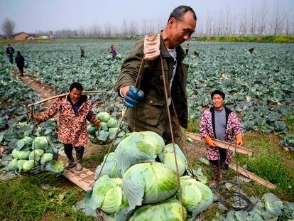 Camponeses da província de Hunan, na fronteira com Hubei, no dia 5 de março.