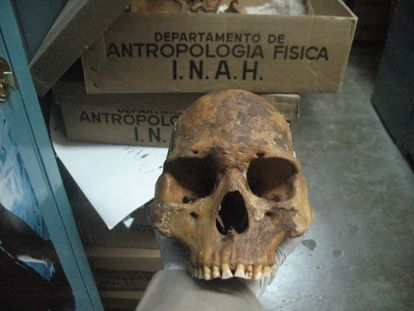 Crânio de um pericú analisado no estúdio da revista 'Science'.