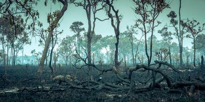 Queimada em uma área da Amazônia.