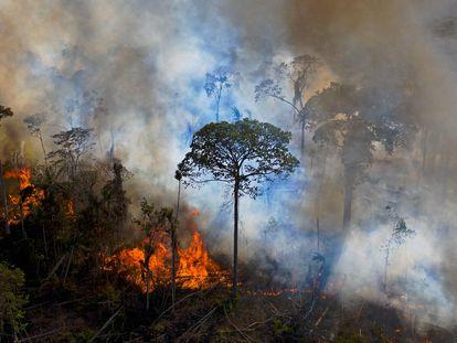 Chamas de uma queimada ilegal se alastram pela Amazônia, em agosto de 2020.