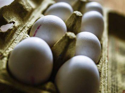 Uma caixa de ovos em Dresden (Alemanha).