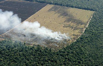 Desmatamento no Mato Grosso para preparar terra para o cultivo.