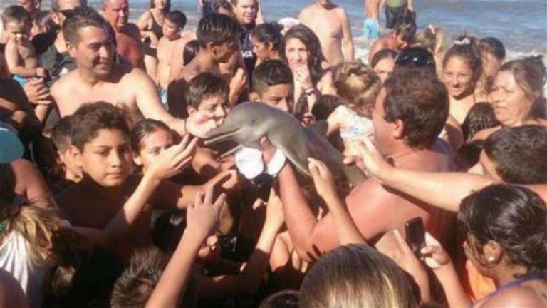 O golfinho que pode ter morrido por desidratação tirando selfie com turistas na Argentina.