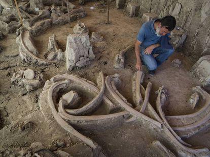 Fósseis de 14 mamutes encontrados no México.
