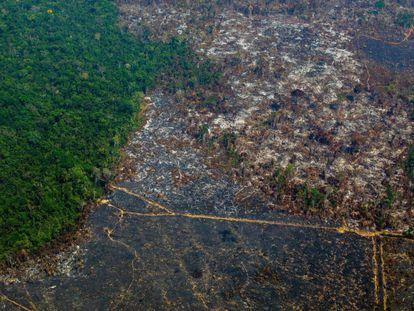 Uma zona da Amazonia deforestada em uma vista aérea tomada em agosto passado na reserva biológica de Altamira.