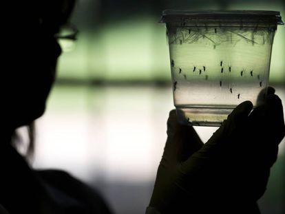 Dez perguntas sobre o zika vírus