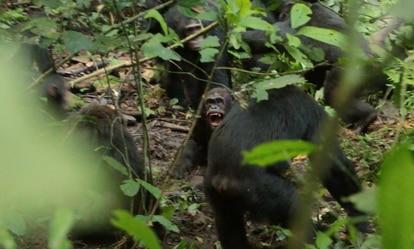 Imagem tomada por cientistas durante o ataque fatal a 'Basie', na qual se vê suas presas no centro da imagem .