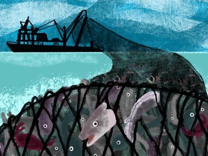 Desperdício do arrasto aumenta chances de extinção da vida marinha