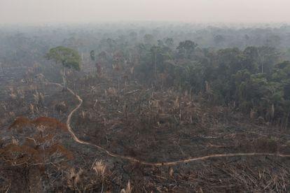 Área devastada por grileiros e madeireiros dentro da TI Karipuna