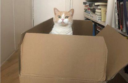 Mía celebra o grande Dia Mundial do Gato.