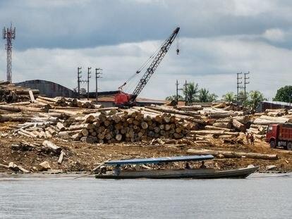 Árvores derrubadas, supostamente de forma ilegal, na Amazônia peruana.