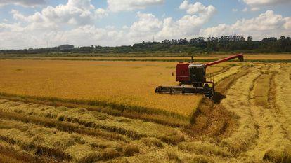 Cooperativa de Produção Agropecuária Nova Santa Rita, do MST, fundada em 30 de junho de 1995.