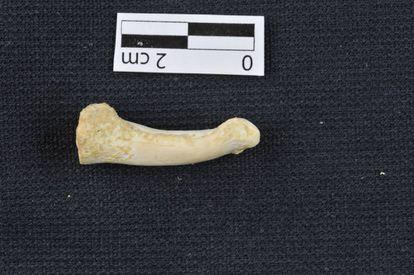 Um dos restos ósseos achados em Callao.
