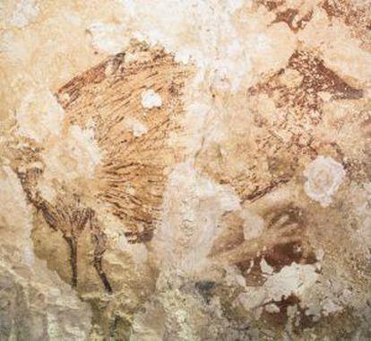 Um dos animais representados é uma celebridade local: o babirusa, uma espécie de porco com presas extravagantes