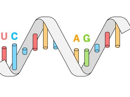 RNA, a molécula que pode nos tirar desta pandemia