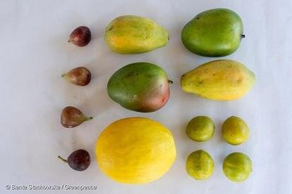 Figo, mamão, manga, melão e limão brasileiros dentre as frutas analisadas pelos laboratórios alemães.