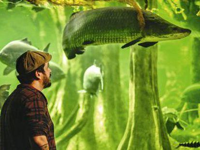 Pirarucu, um peixe gigante para salvar a Amazônia.