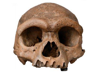 O crânio de Harbin.