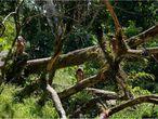 Crianças brincam em aldeia dentro da Terra Indígena Yanomami, onde vivem 25.000 índios.