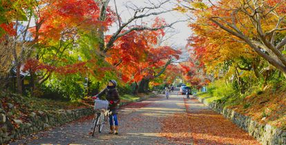 Rua de Quioto na plenitude do outono, a nordeste da cidade japonesa.