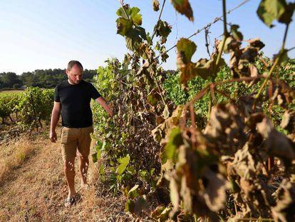 Viticultor em vinhedos de Sussargues, perto de Montpellier (França).