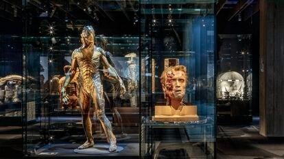 Uma das salas do novo Museu do Cinema, em Los Angeles. Em primeiro plano, a cabeça do personagem de Arnold Schwarzenegger em 'O exterminador do futuro', e, à esquerda, a criatura de 'A forma da água'. Daniel Gomez (The Academy)