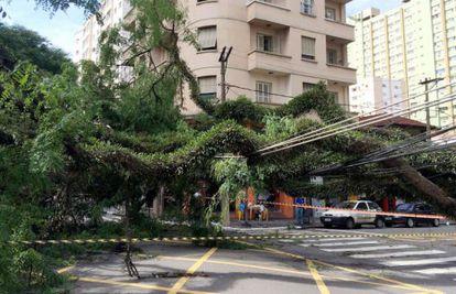 Árvore caída sobre fiação na Vila Mariana, em dezembro.