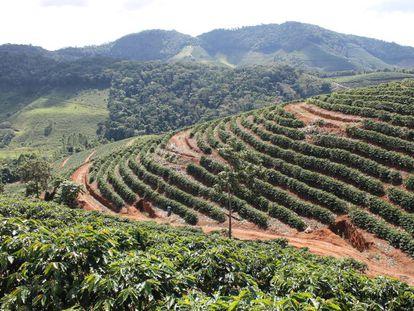Produção de café no Rio.