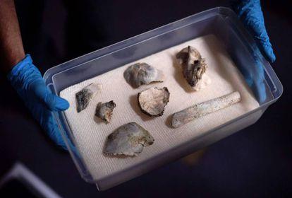 Os restos de Luzia, o fóssil mais antigo das Américas, apresentados nesta sexta.