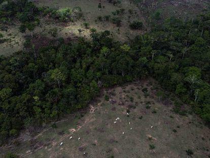 Desmatamento em torno de área indígena na Amazônia.
