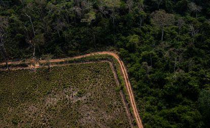 Trecho desmatado da Amazônia no Acre, em flagrante feito por sobrevoo na região neste sábado.