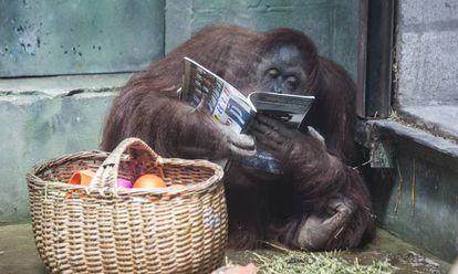 'Sandra' com uma revista ao lado da cesta com sua comida.