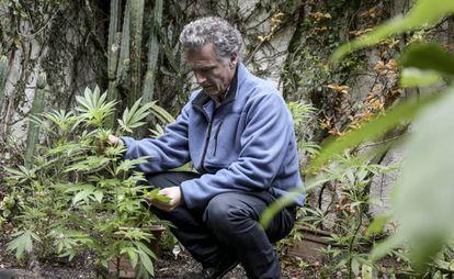 O empresário Eduardo Blasina, em uma plantação de maconha.