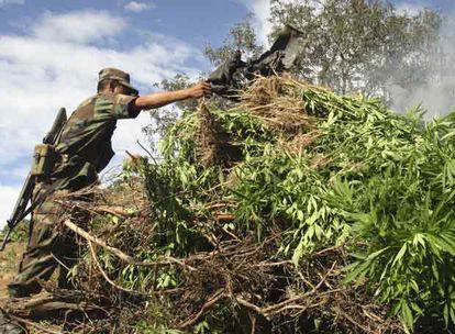 Soldado mexicano queima plantação de maconha.